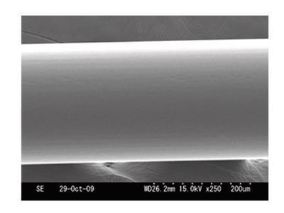 P-Line vlasec Floroclear 1000 m  0,30 mm, 10,42 kg (750187402) - 2