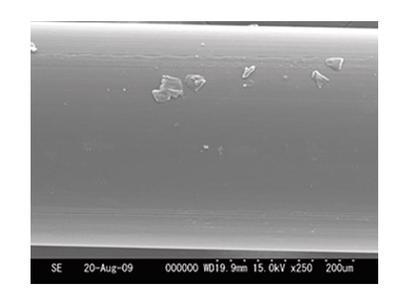 P-Line vlasec Floroclear 1000 m  0,30 mm, 10,42 kg (750187402) - 3